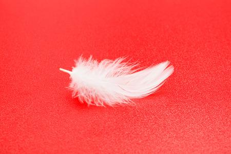animalitos tiernos: Una pequeña pluma blanca sobre fondo rojo con textura