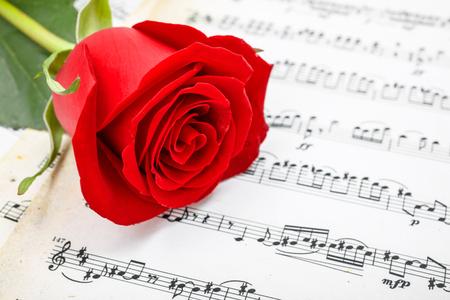Single red rose flower on musical sheet Stock Photo