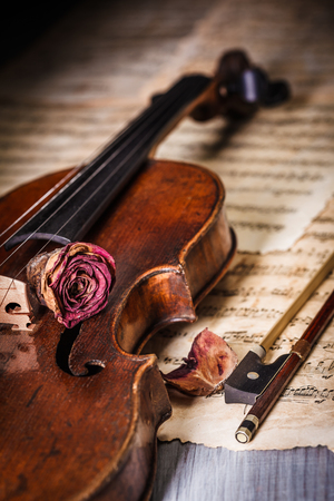 Dried rose over an old violin, decay concept