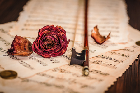 Dried rose over an old musical score, decay concept