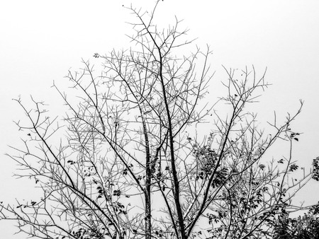 Las ramas de los árboles sobre un fondo blanco