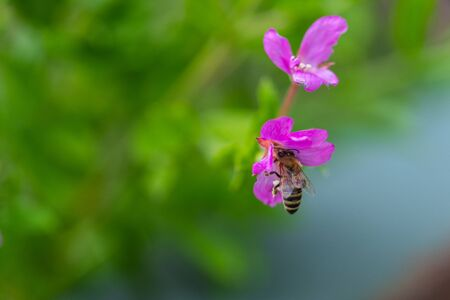 Bee  on a shining flower Stock Photo
