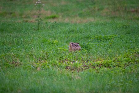 a  bunny on a field with green background