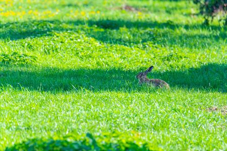 a  rabbit is sitting in a field and hopes not to be seen