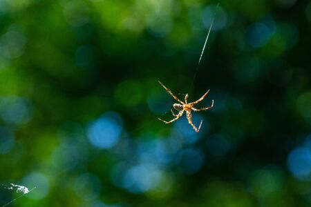 A spider weaves her  net in the middle of the air with blurred background Stock Photo