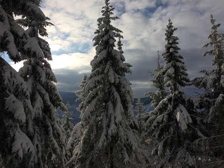 Frozen trees covered with fresh snow in Sněžka, Krkonoše in Czech republic