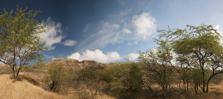 diamond head: View of Diamond Head from low ground, on Oahu, Hawaii. Also resembles an African landscape.