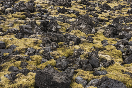 Moss and Rocks terrain at Londrangar, Iceland