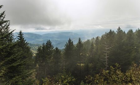 Richland Balsam Overlook on a foggy day on the Blue Ridge Parkway, NC, USA