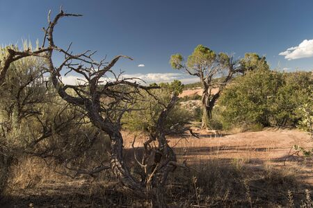 View of Colorado National Monument, USA with a dead tree in the foreground Banco de Imagens