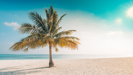Beautiful palm trees with blue sky. Tropical nature background