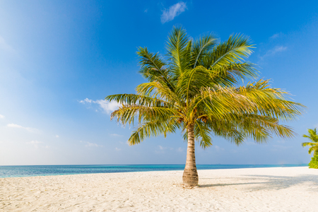 Beautiful single palm tree with blue sky. Tropical nature background