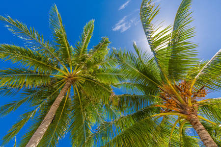 Wonderful green palm trees and blue sky