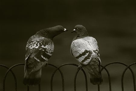 Sepia picture of two pigeons kissing.