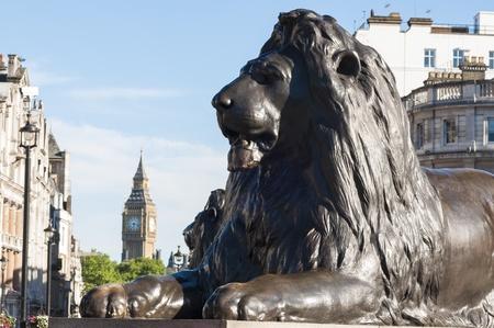 trafalgar: Cropped shot of lion statue in Trafalgar square in central London, UK