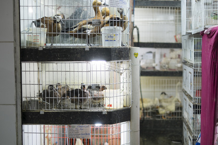 Ducks in cages for sale in street market in Brazil  Animal rights are vastly disregarded in Brazil, and animals are kept in stressful conditions  Editorial