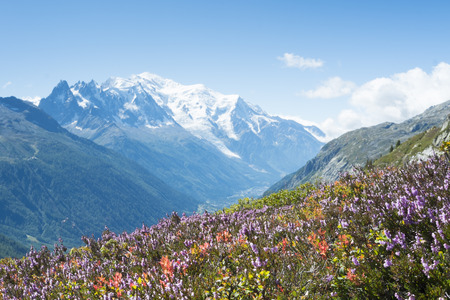Flowery meadow in French countryside with Mont Blanc mountain range in the background