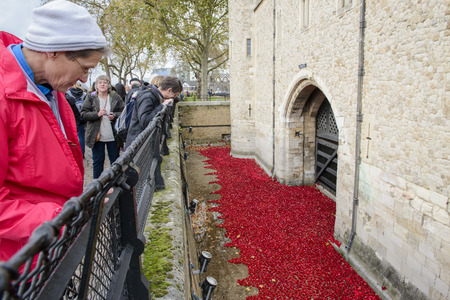 LONDON, UK - NOVEMBER 08: People admiring art installation by Paul Cummins at Tower of London. November 08, 2014 in London. The ceramic poppies were planted to mark the centenary of WWI Editorial