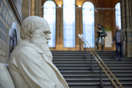 LONDON, UK - DECEMBER 11: Profile of Charles Darwin statue at the Natural History Museum. December 11, 2014 in London. Editorial