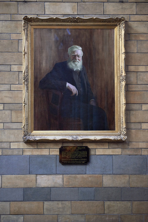 wallace: LONDON, UK - DECEMBER 11: portrait of Alfred Russel Wallace at the Natural History Museum. December 11, 2014 in London. Editorial
