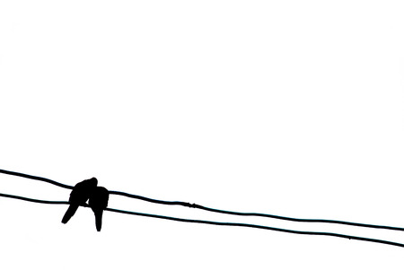 birds on a wire: Couple of birds on wire Stock Photo