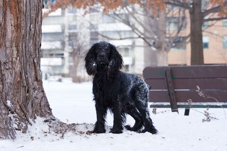 a lively black dog is watching