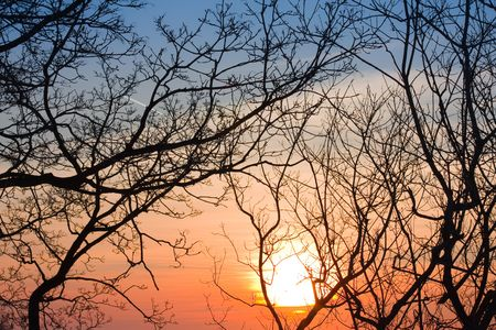 beautiful sunset with  branch foreground