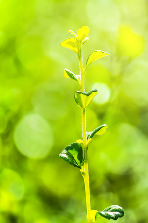 Small young shoots of trees alone in the green garden with beautiful bokeh background.