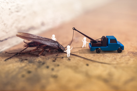 3D rendering composite with a photograph of a dead cockroach lying on a floor with the 3D characters of Pest Control Worker and truck for protection hygienic area. Stock fotó