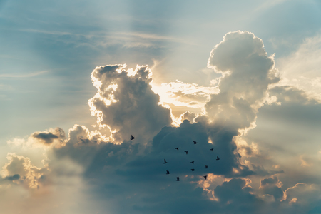 sunset with towering cumulus clouds and a flock of bird in the foreground.