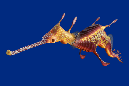 3d rendering of a Weedy seadragon, the ocean creature at Australia and Tasmania island, isolated on blue background with clipping paths. 写真素材