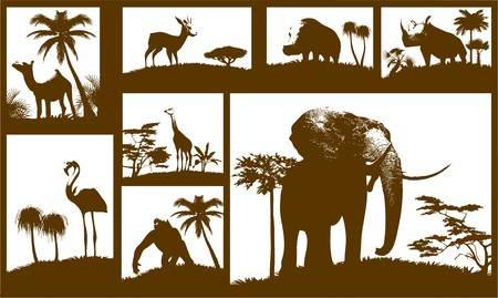African animals collection Stock Vector - 7334418
