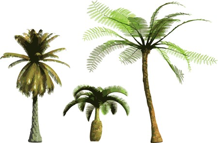 color Palms  Vector