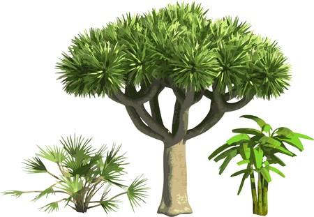couleur Palms