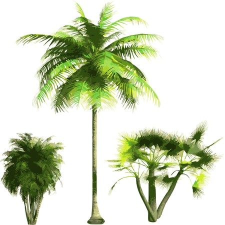 coconut palm: color Palms