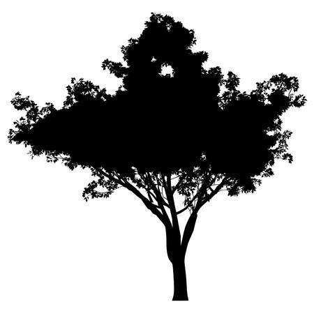 plats: Tree
