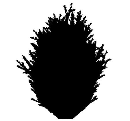 Tree   Stock Vector - 7334196