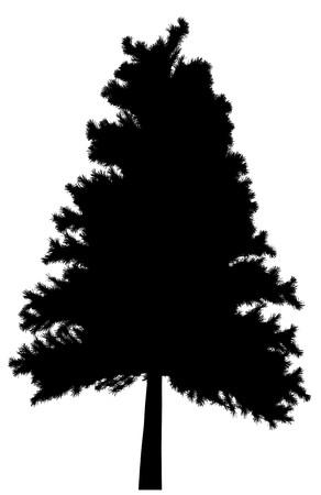 pine tree isolated: Tree  Illustration