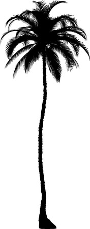 palm tree isolated: Tree  Illustration