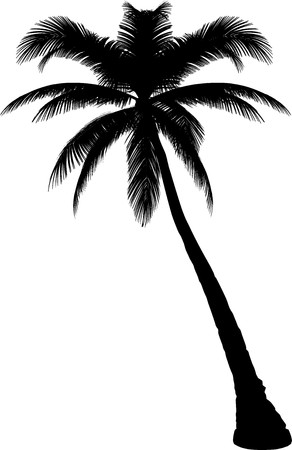 palm tree isolated: Tree