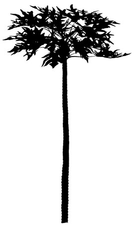 Tree Stock Vector - 7334307