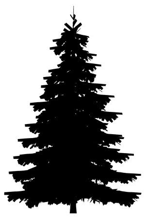 the pine tree: �rbol