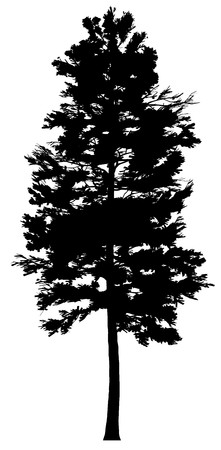 pine tree branch: Tree  Illustration