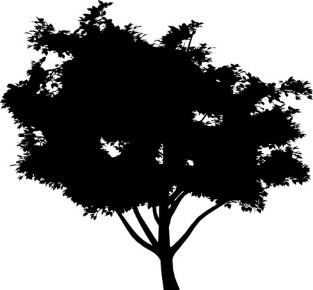 Tree Stock Vector - 7334273