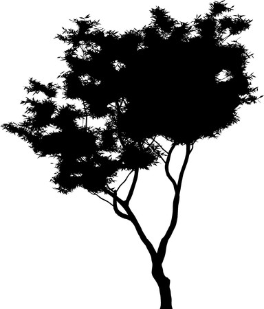 Tree  Stock Vector - 7334352