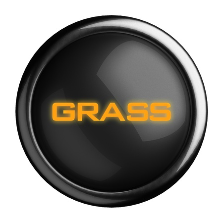 silver grass: Word on black button