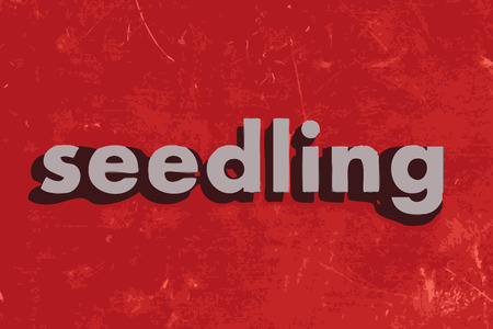 seedling: seedling vector word on red concrete wall