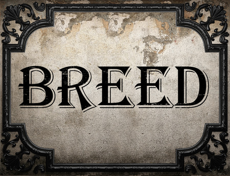 breed: breed word on concrette wall