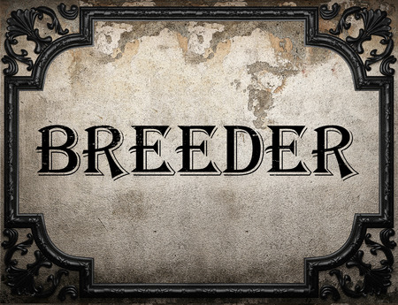 breeder: breeder word on concrette wall Stock Photo