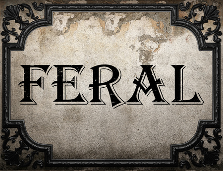 feral: feral word on concrette wall